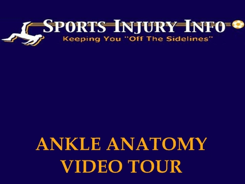 Ankle Anatomy Video Tour