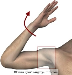 Shoulder Dislocation Mechanism