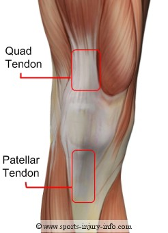 Knee Tendons - Sports Injury Info