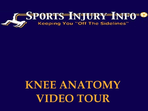 Knee Anatomy Video Tour