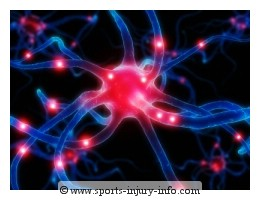 Neuron Pain Receptor - Sports Injury Info