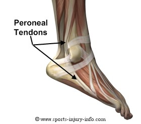 Peroneal Tendon Foot