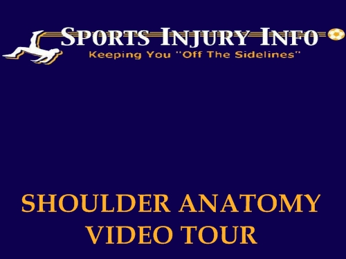 Shoulder Anatomy - Sports Injury Info