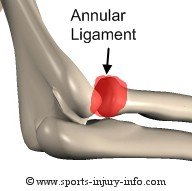 Annular Ligament - Sports Injury Info