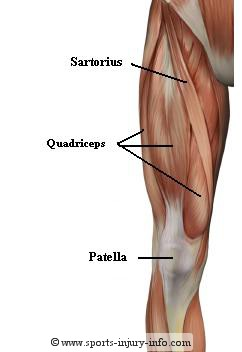 Knee anatomy sports injury info muscles ccuart